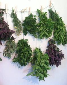 Drying herbs to store for later use.